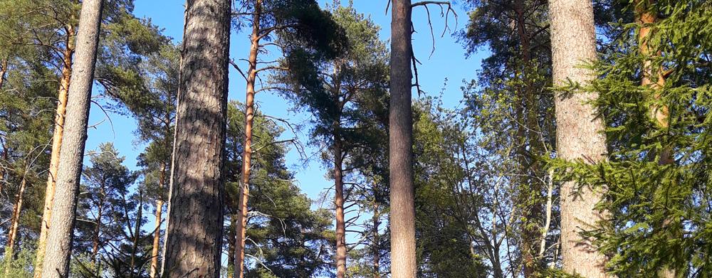 Ilmastoviisas maatalous ja metsätalous